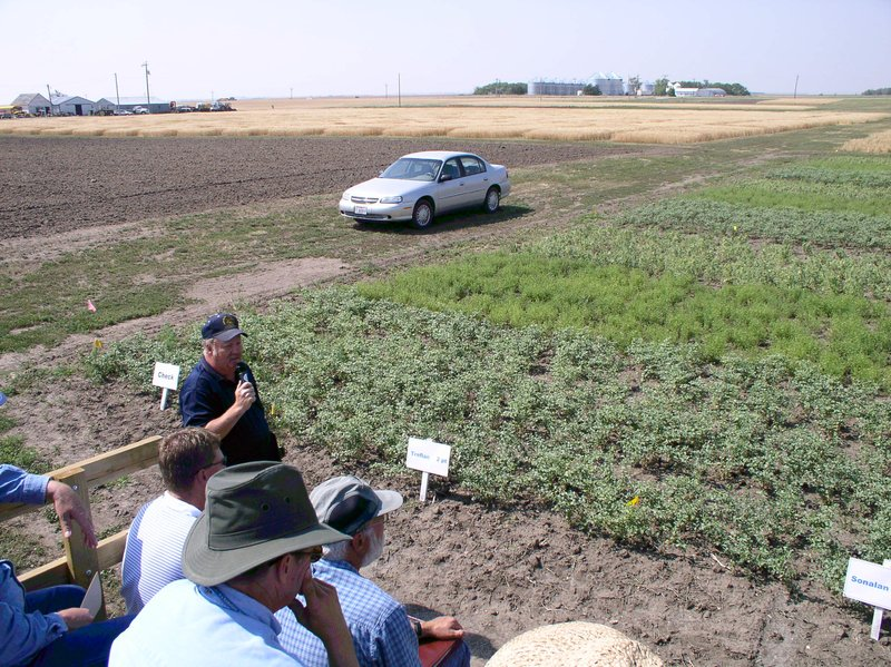 SDSU Conducts Weed Control Research in Pulse Crops.thmb